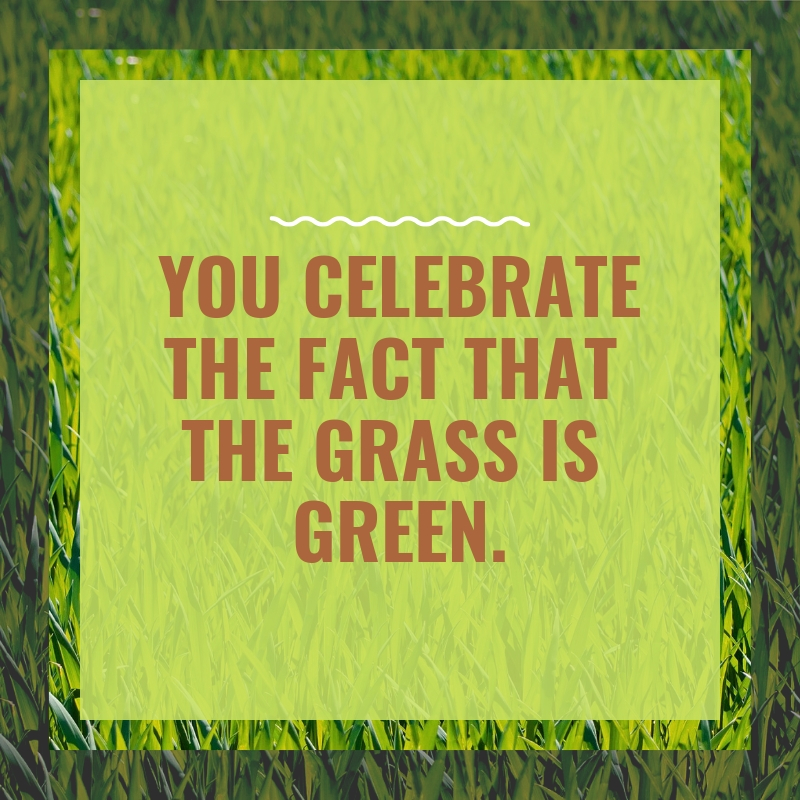 "A grassy green background with ""You Celebrate the fact that the grass is green."" in brown writing."